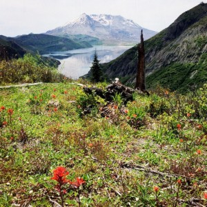 Wild flowers blooming near St. Helens