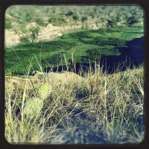 Cactus and grassland